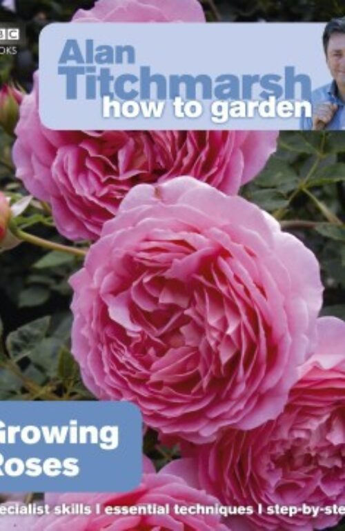 How To Garden Growing Roses